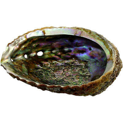 Smudges Abalone Shell 89615